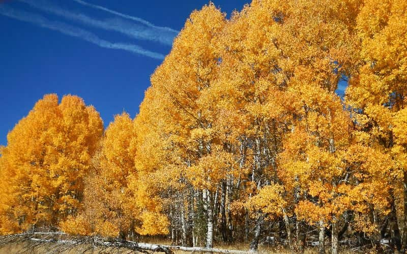 GoldenTree closes on $443m CLO