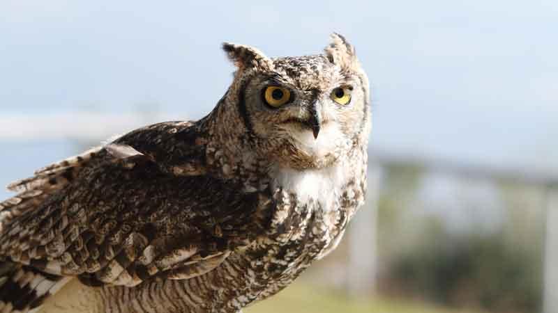 Owl Rock confirms potential strategic tie-up