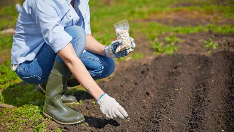 Seward & Kissel measures COVID's impact on seed investment
