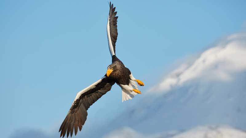 Aristeia alum joins Eagle Point Credit