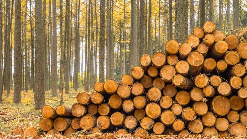 J.P. Morgan buys timberland firm
